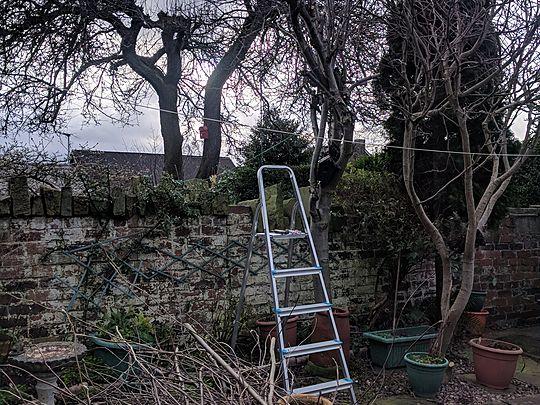 Treemendous task