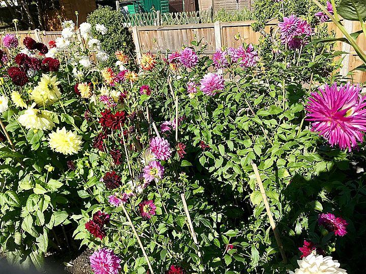 Help Mrs B access her garden again