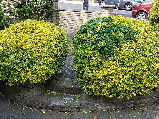 Rub a dub dub two good gymers and a shrub!