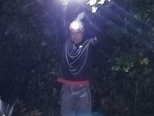 Sam-did lamp