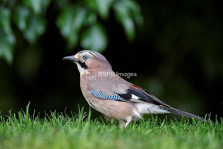 The RSPB's Big Garden Bird Watch 2020!