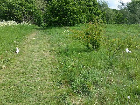 Litter pick in 'Bancroft Park'