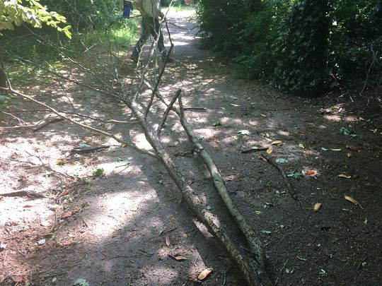 Tree mendous damage!