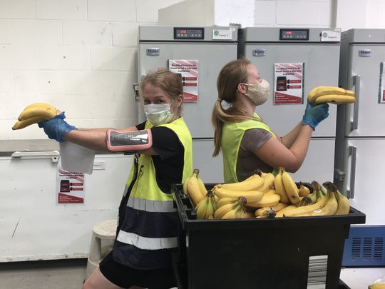 🍌Duelling  Bananas 🍌