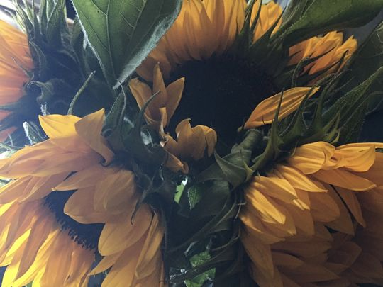 SUNshine and thundery FLOWERS