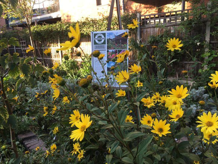Five go gardening in Springbank