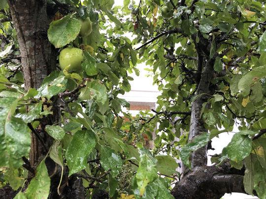 Apple-easure to help