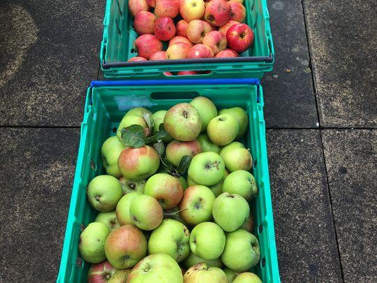 Apple Picking in Poppleton