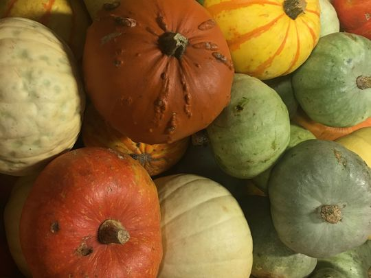 Squash Buckling Adventures with City  Harvest