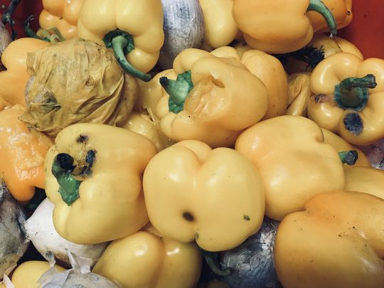 A lot of Pecks of yellow Peppers Packed.