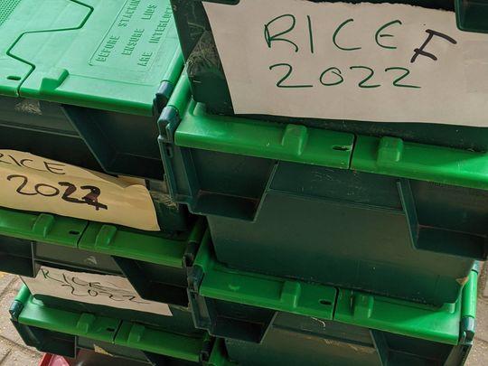 Rice Rice Baby!