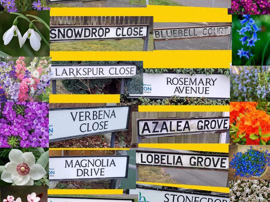 Spring Street Name Challenge