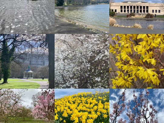 The Great Spring Collage