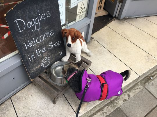 Retail Open, Doggies Welcome
