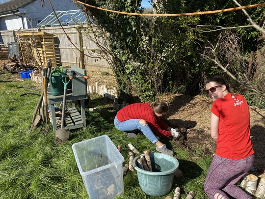 Zen raking and the art of a silver birch border