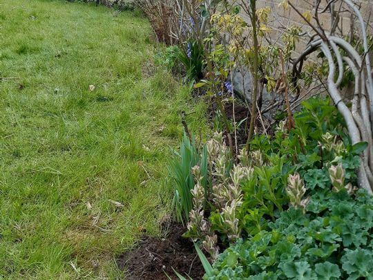 Weeding my way around the garden