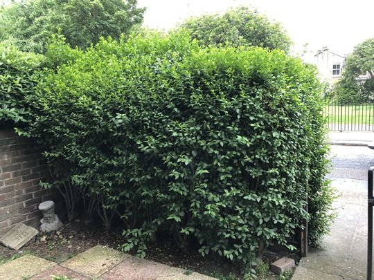 I tried to keep it privet but I'm in shear paradise hedge trimming!