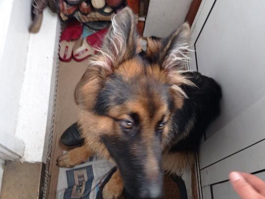 Still just a puppy?!
