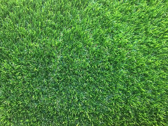 The Green Green Grass of …. City Harvest's reception