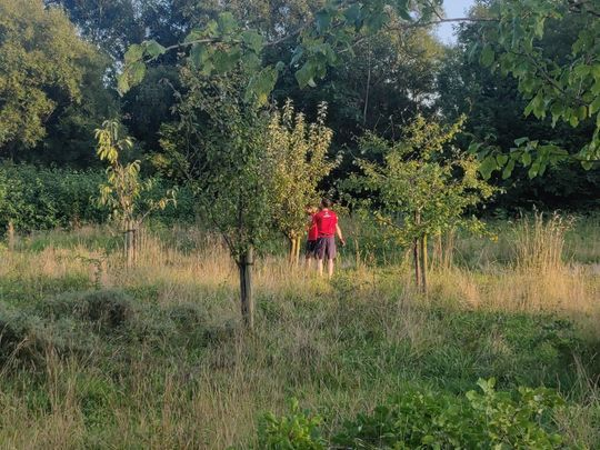 Pre - pearing the Edgeley Field Orchard