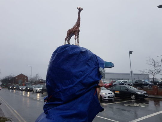 Litter picking in this weather? You're having a giraffe